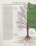THE ART OF WOODWORKING 木工艺术第6期第16张图片