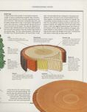 THE ART OF WOODWORKING 木工艺术第6期第17张图片
