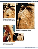 Carving the Human Face- Capturing Character and Expression in Wood第65张图片