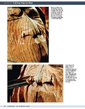 Carving the Human Face- Capturing Character and Expression in Wood第68张图片