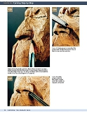 Carving the Human Face- Capturing Character and Expression in Wood第70张图片