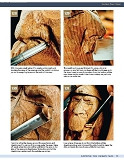 Carving the Human Face- Capturing Character and Expression in Wood第71张图片