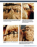 Carving the Human Face- Capturing Character and Expression in Wood第90张图片